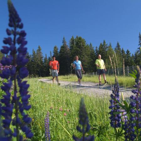 nordic-walking-rentner-bewegung-sport